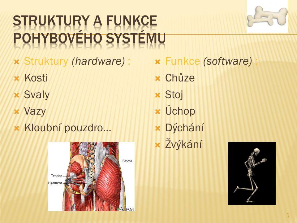 Struktury a funkce pohybového systému