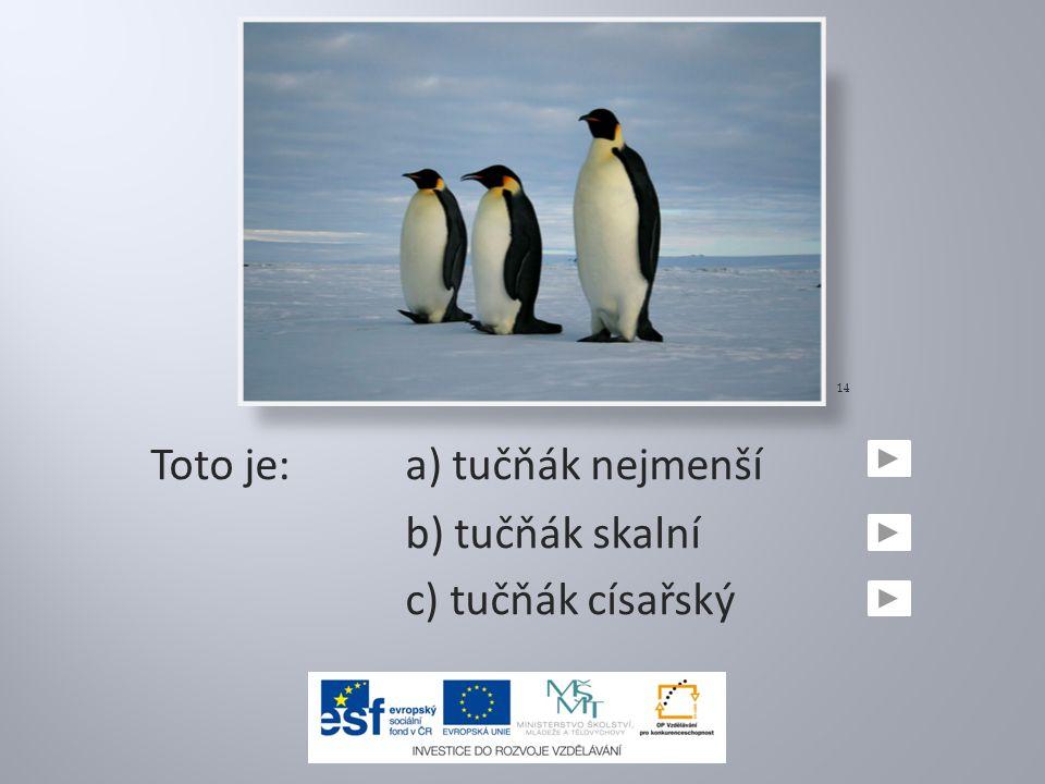Toto je: a) tučňák nejmenší
