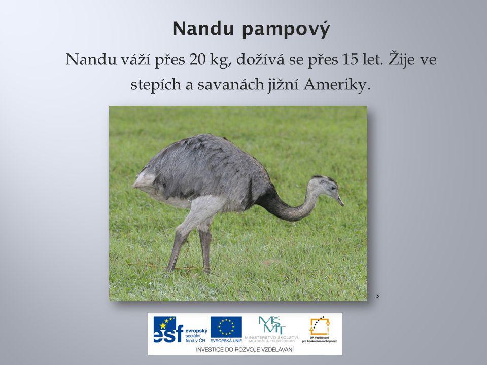 Nandu pampový Nandu váží přes 20 kg, dožívá se přes 15 let. Žije ve stepích a savanách jižní Ameriky.
