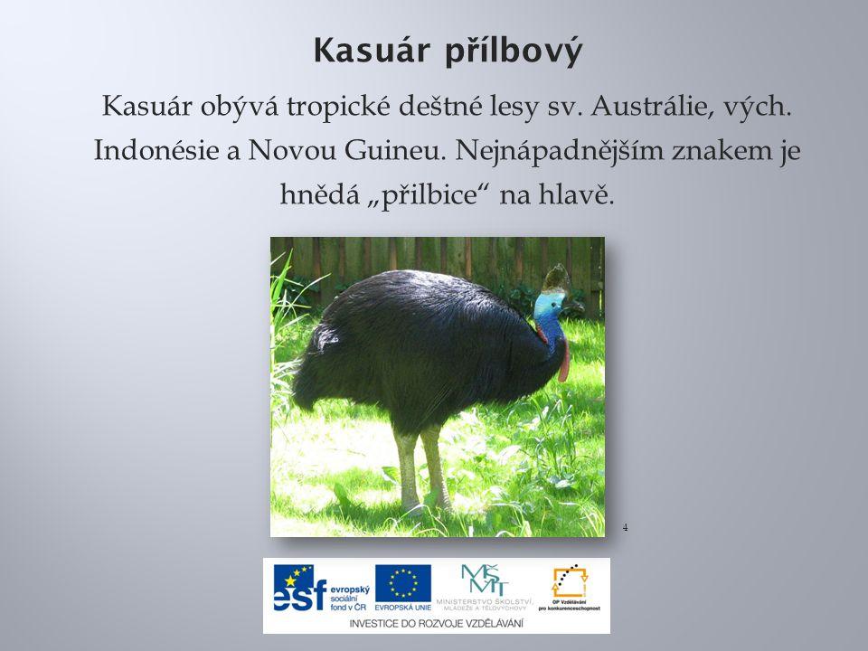 """Kasuár přílbový Kasuár obývá tropické deštné lesy sv. Austrálie, vých. Indonésie a Novou Guineu. Nejnápadnějším znakem je hnědá """"přilbice na hlavě."""