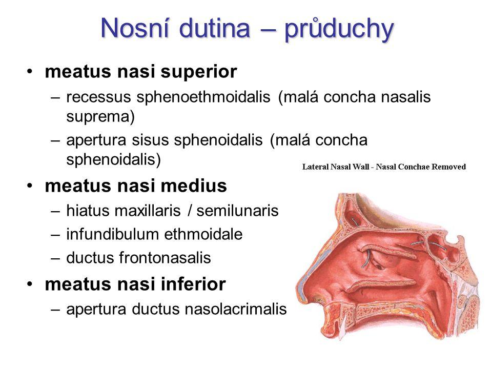 Nosní dutina – průduchy