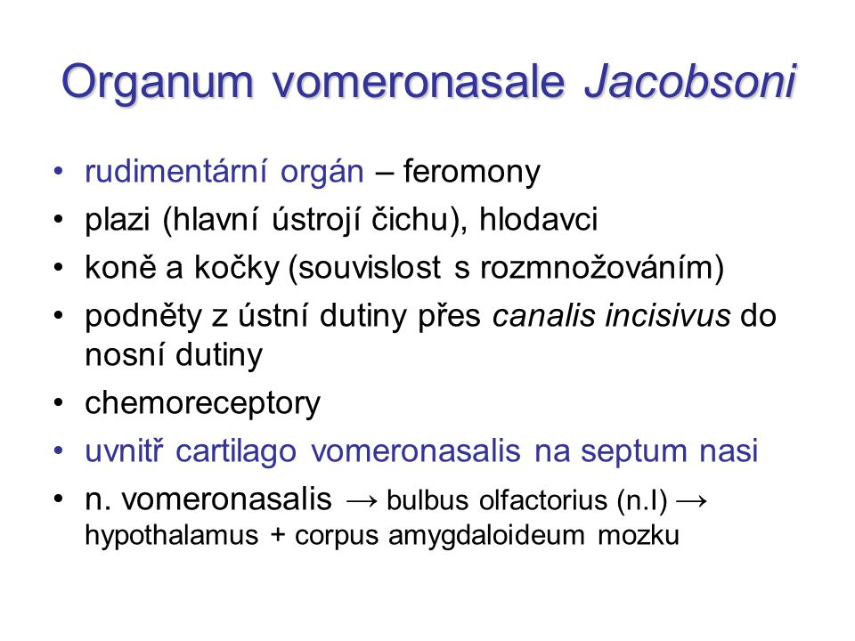 Organum vomeronasale Jacobsoni
