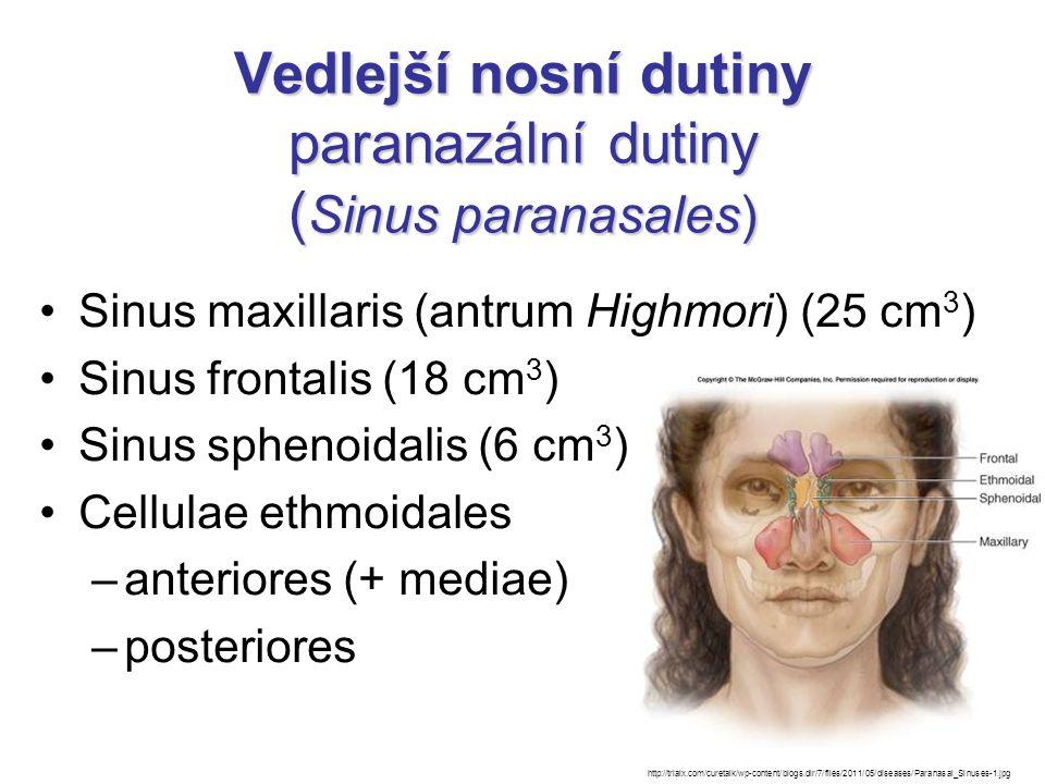 Vedlejší nosní dutiny paranazální dutiny (Sinus paranasales)