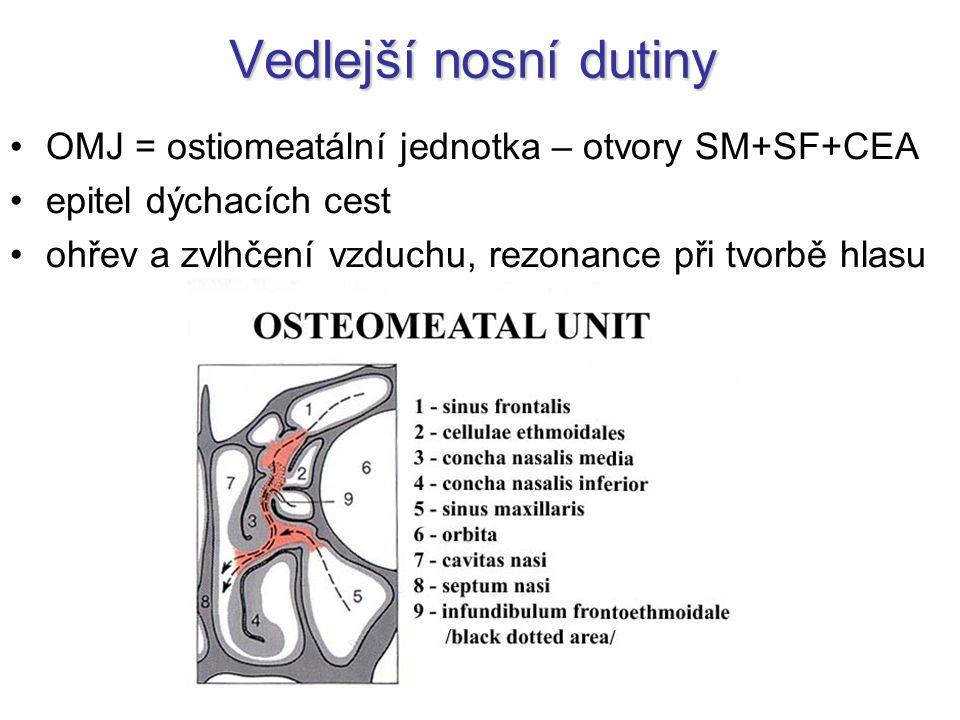 Vedlejší nosní dutiny OMJ = ostiomeatální jednotka – otvory SM+SF+CEA