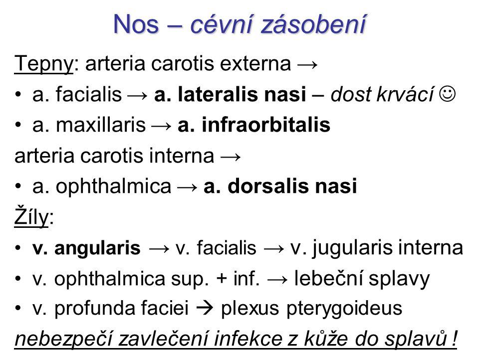 Nos – cévní zásobení Tepny: arteria carotis externa →