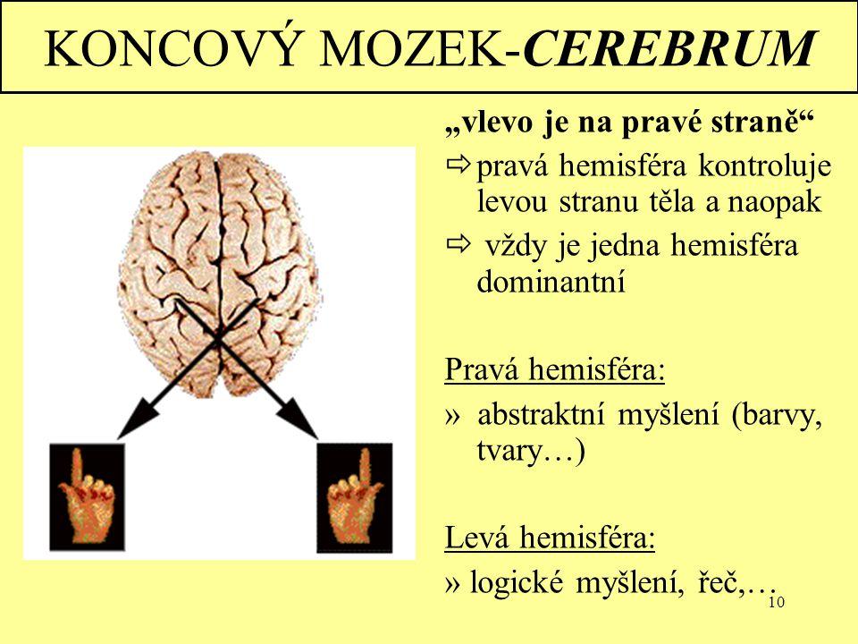 KONCOVÝ MOZEK-CEREBRUM