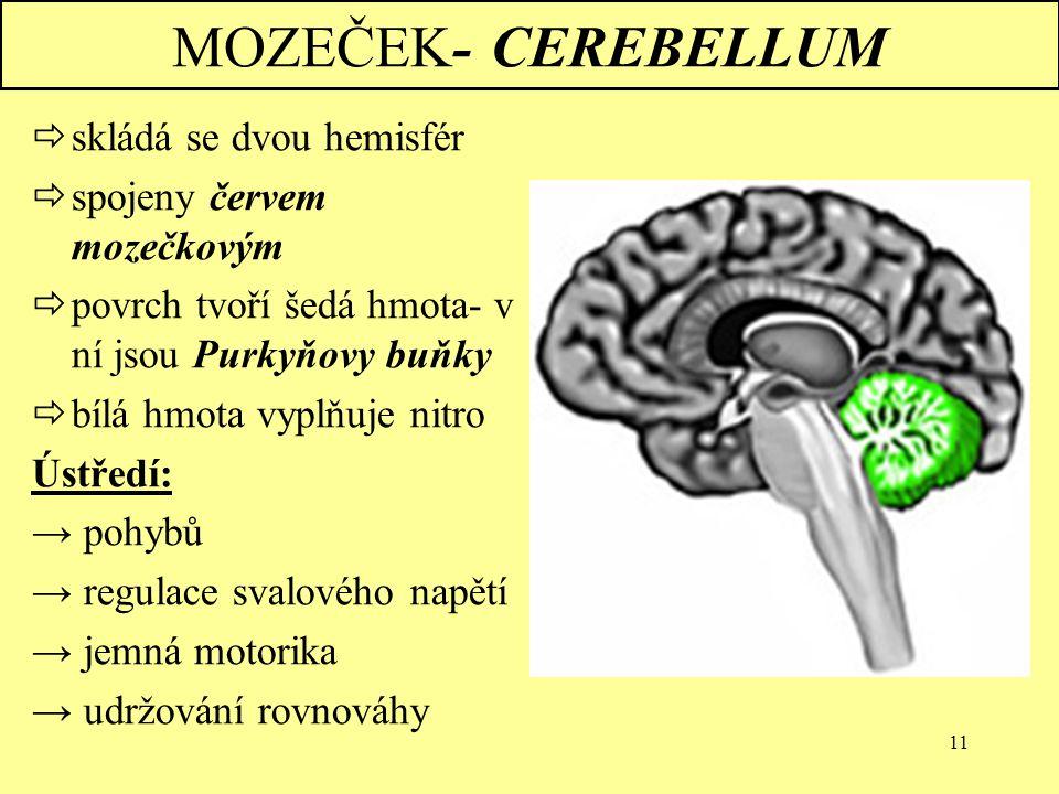 MOZEČEK- CEREBELLUM skládá se dvou hemisfér spojeny červem mozečkovým