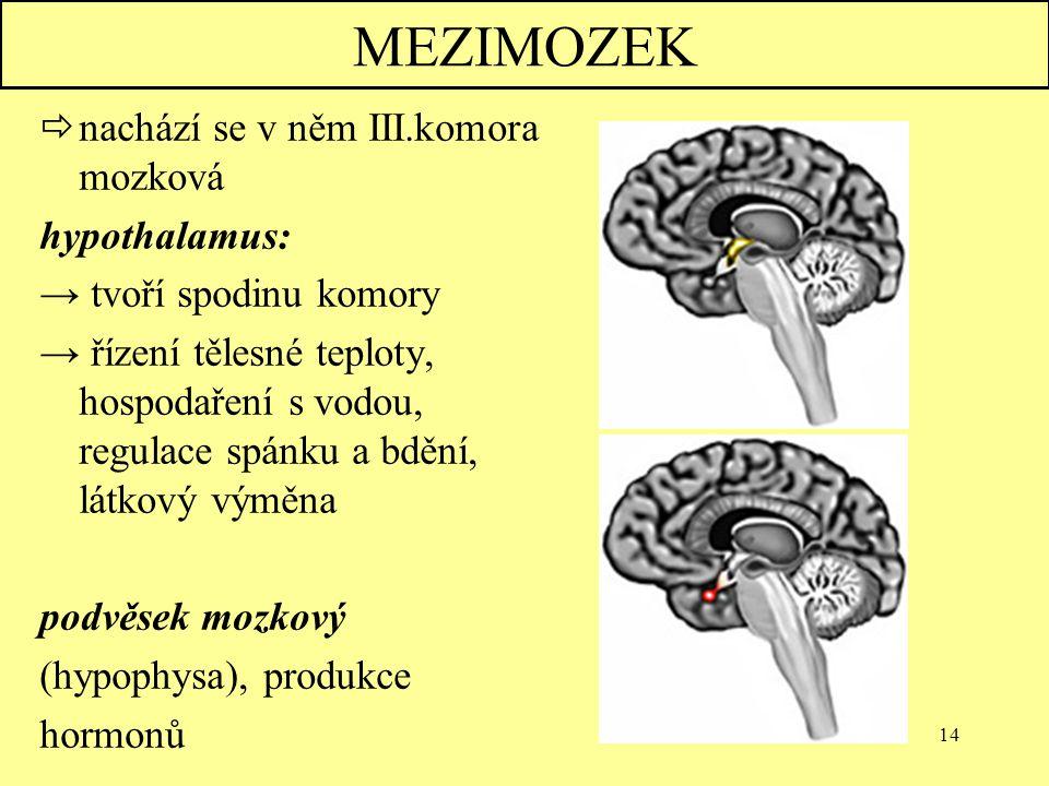 MEZIMOZEK nachází se v něm III.komora mozková hypothalamus: