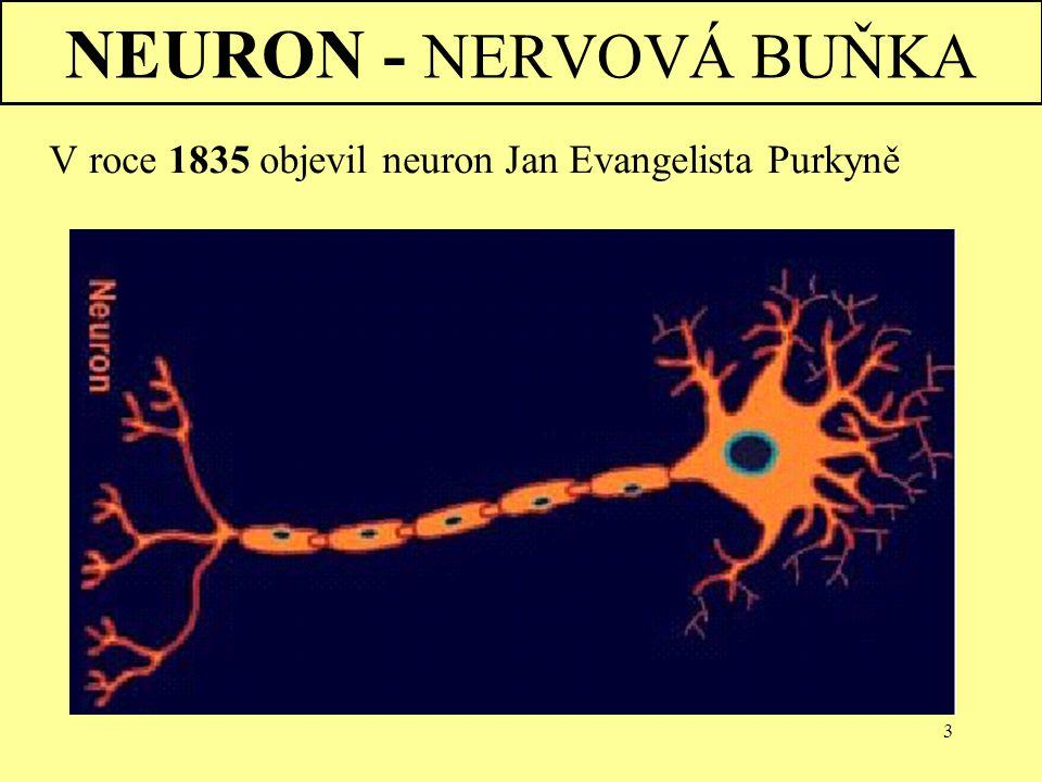 NEURON - NERVOVÁ BUŇKA Nervová soustava V roce 1835 objevil neuron Jan Evangelista Purkyně