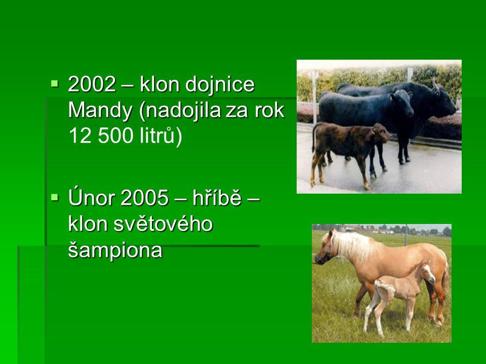 2002 – klon dojnice Mandy (nadojila za rok 12 500 litrů)