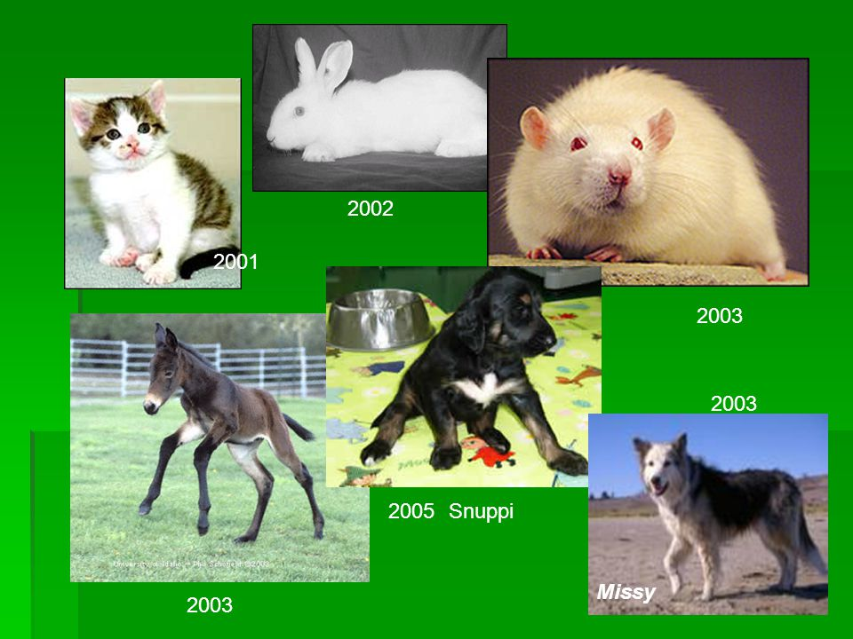 2002 2001 2003 2003 2005 Snuppi Missy 2003