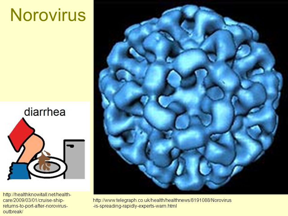 Norovirus http://healthknowitall.net/health-care/2009/03/01/cruise-ship-returns-to-port-after-norovirus-outbreak/