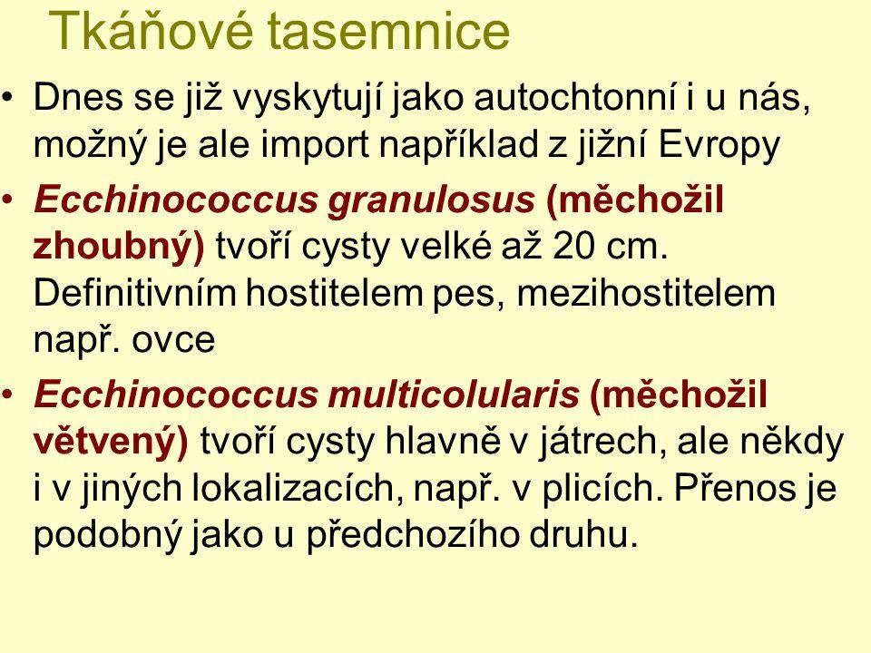 Tkáňové tasemnice Dnes se již vyskytují jako autochtonní i u nás, možný je ale import například z jižní Evropy.