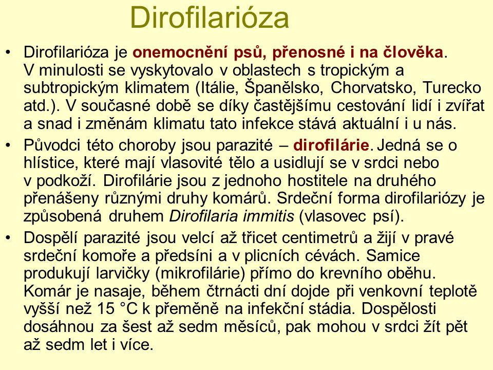 Dirofilarióza