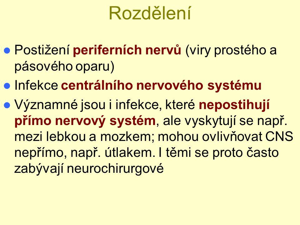 Rozdělení Postižení periferních nervů (viry prostého a pásového oparu)