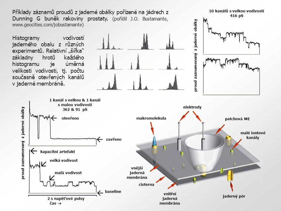 Příklady záznamů proudů z jaderné obálky pořízené na jádrech z Dunning G buněk rakoviny prostaty. (pořídil J.O. Bustamante, www.geocities.com/jobustamante)