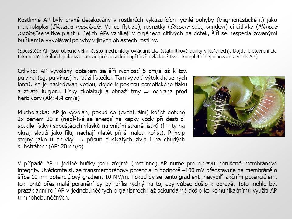 Rostlinné AP byly prvně detekovány v rostlinách vykazujících rychlé pohyby (thigmonastické r.) jako mucholapka (Dionaea muscipula, Venus flytrap), rosnatky (Drosera spp., sundew) ci citlivka (Mimosa pudica, sensitive plant ). Jejich APs vznikají v orgánech citlivých na dotek, šíří se nespecializovanými buňkami a vyvolávají pohyby v jiných oblastech rostliny.