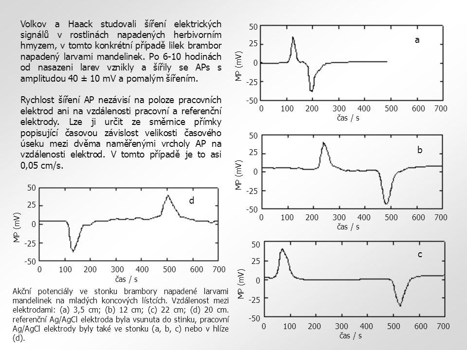 Volkov a Haack studovali šíření elektrických signálů v rostlinách napadených herbivorním hmyzem, v tomto konkrétní případě lilek brambor napadený larvami mandelinek. Po 6-10 hodinách od nasazeni larev vznikly a šířily se APs s amplitudou 40 ± 10 mV a pomalým šířením.