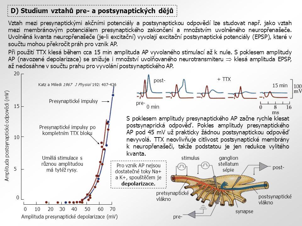 D) Studium vztahů pre- a postsynaptických dějů