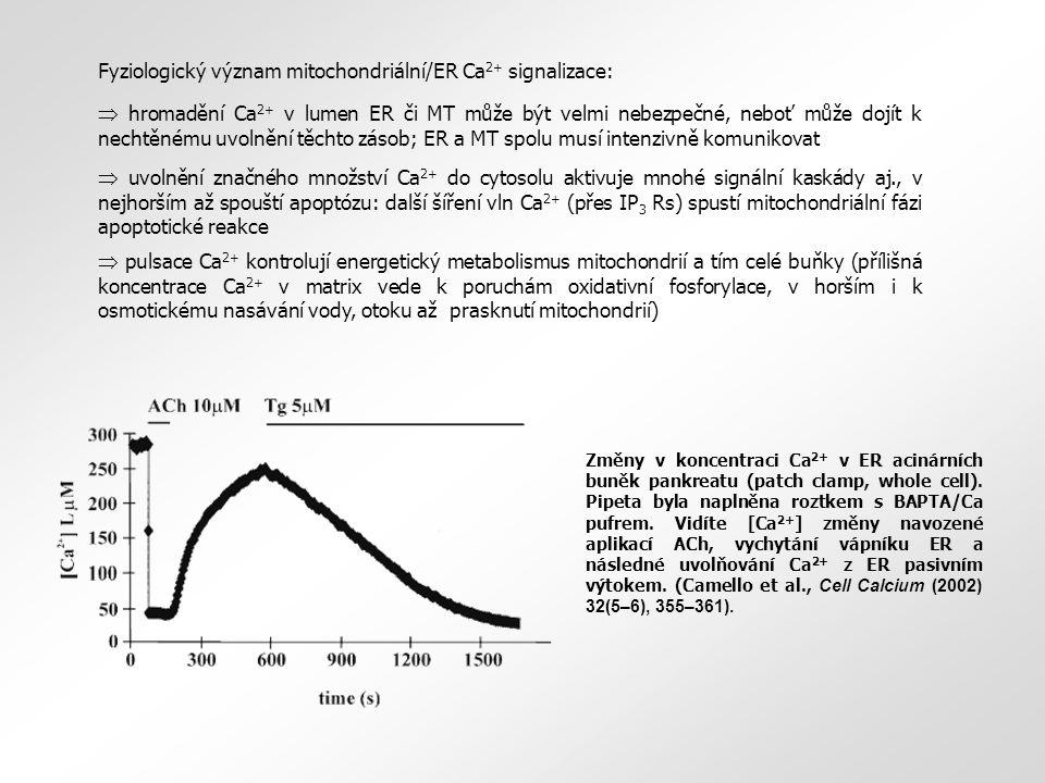 Fyziologický význam mitochondriální/ER Ca2+ signalizace: