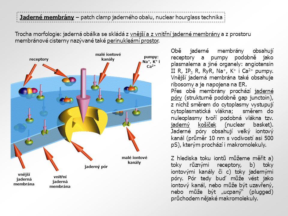 vnitřní jaderná membrána vnější jaderná membrána