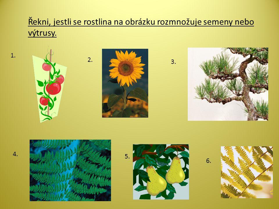Řekni, jestli se rostlina na obrázku rozmnožuje semeny nebo výtrusy.