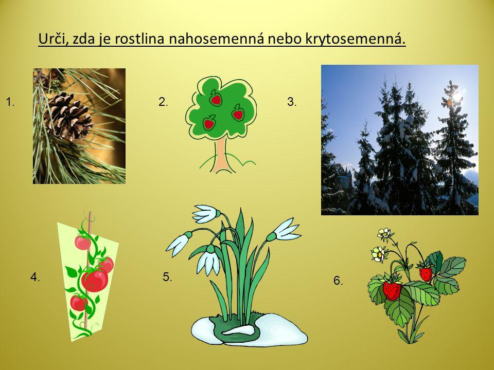 Urči, zda je rostlina nahosemenná nebo krytosemenná.