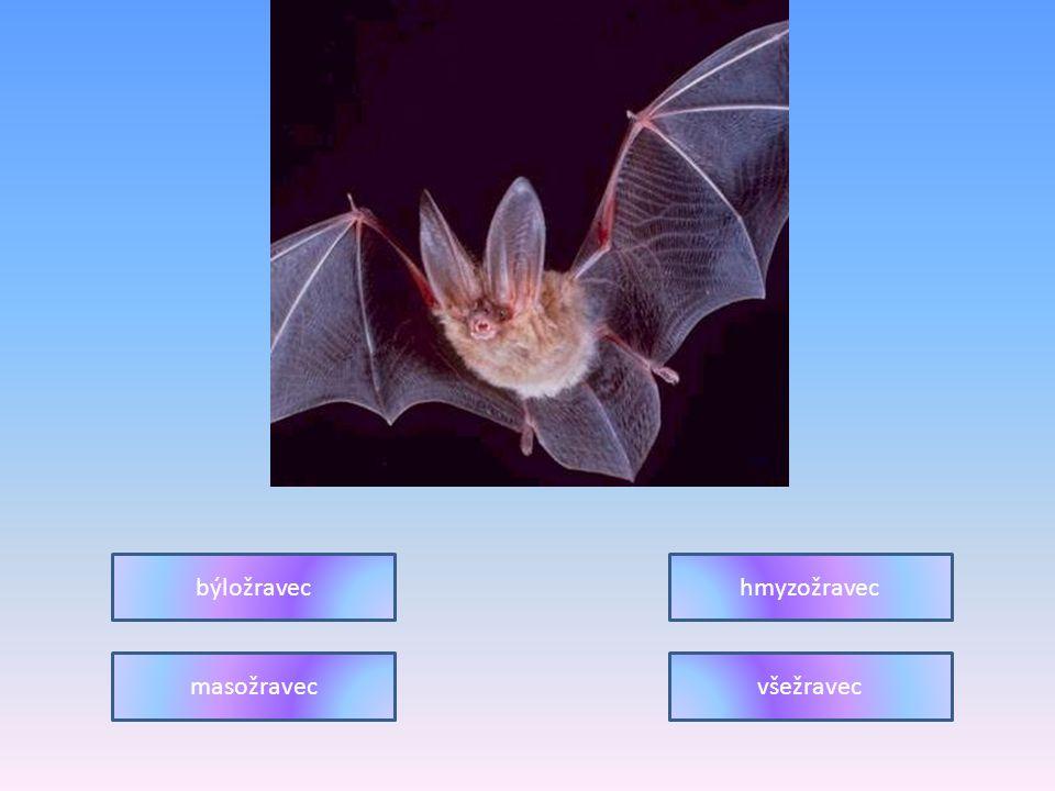 býložravec hmyzožravec masožravec všežravec