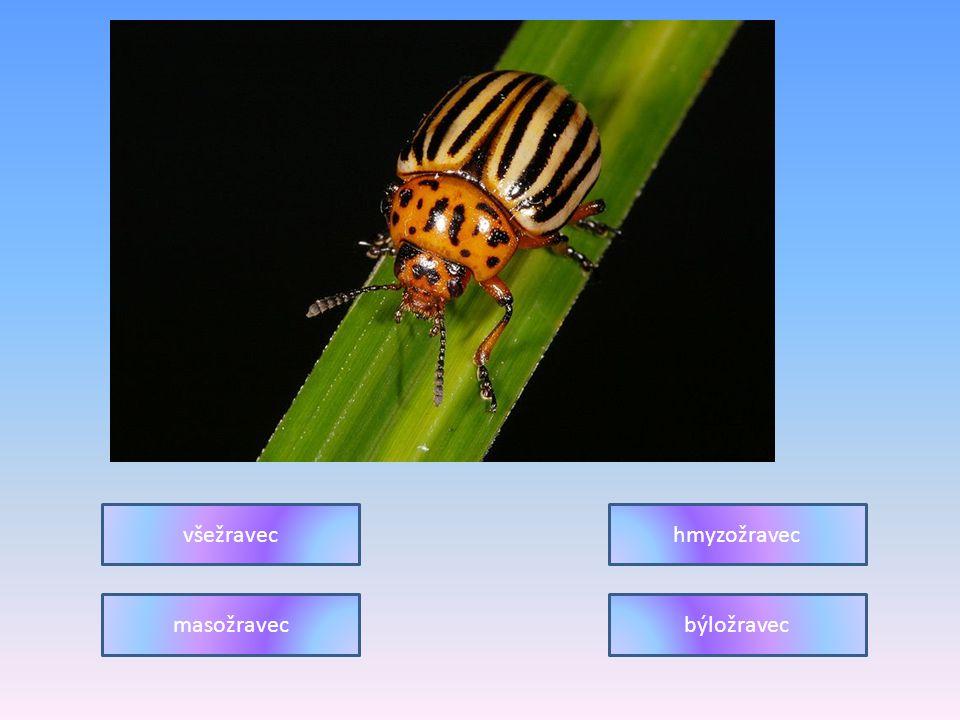 všežravec hmyzožravec masožravec býložravec