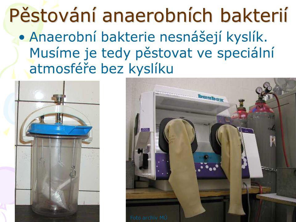 Pěstování anaerobních bakterií