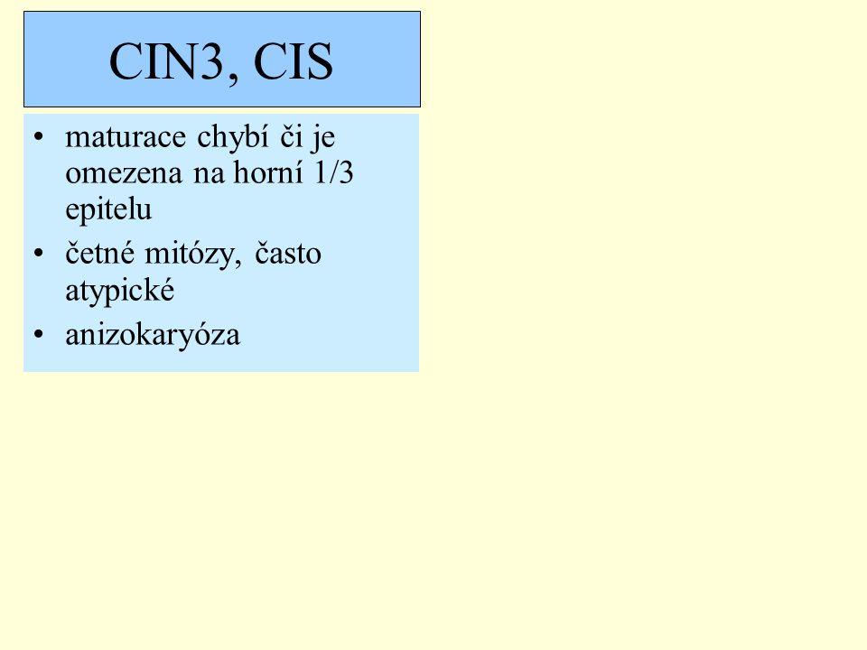 CIN3, CIS maturace chybí či je omezena na horní 1/3 epitelu
