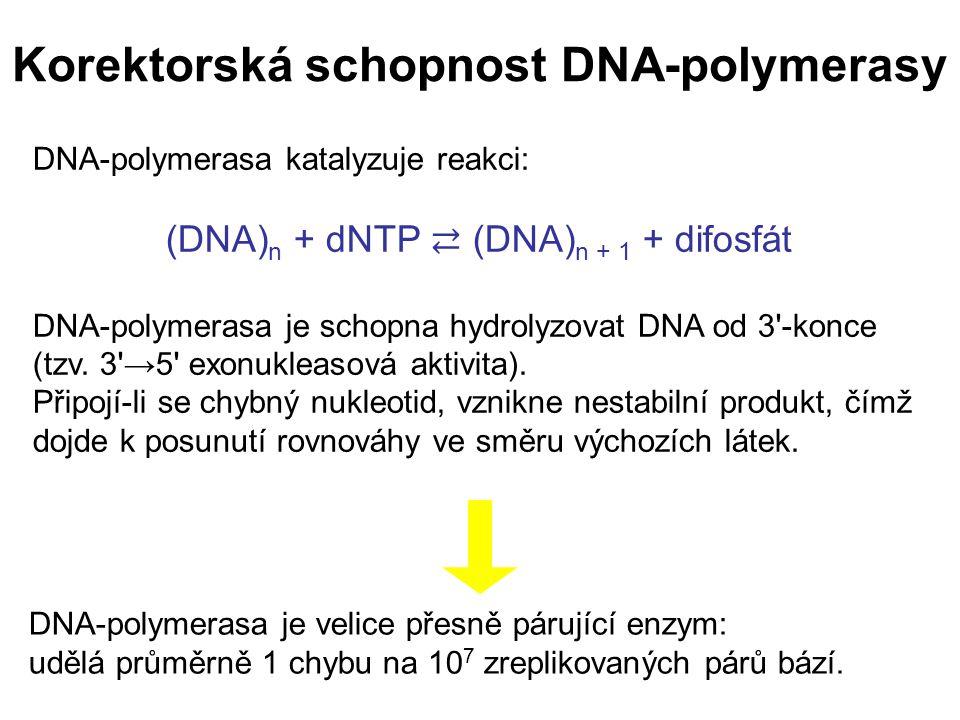 Korektorská schopnost DNA-polymerasy