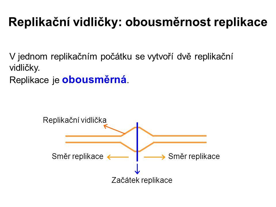 Replikační vidličky: obousměrnost replikace