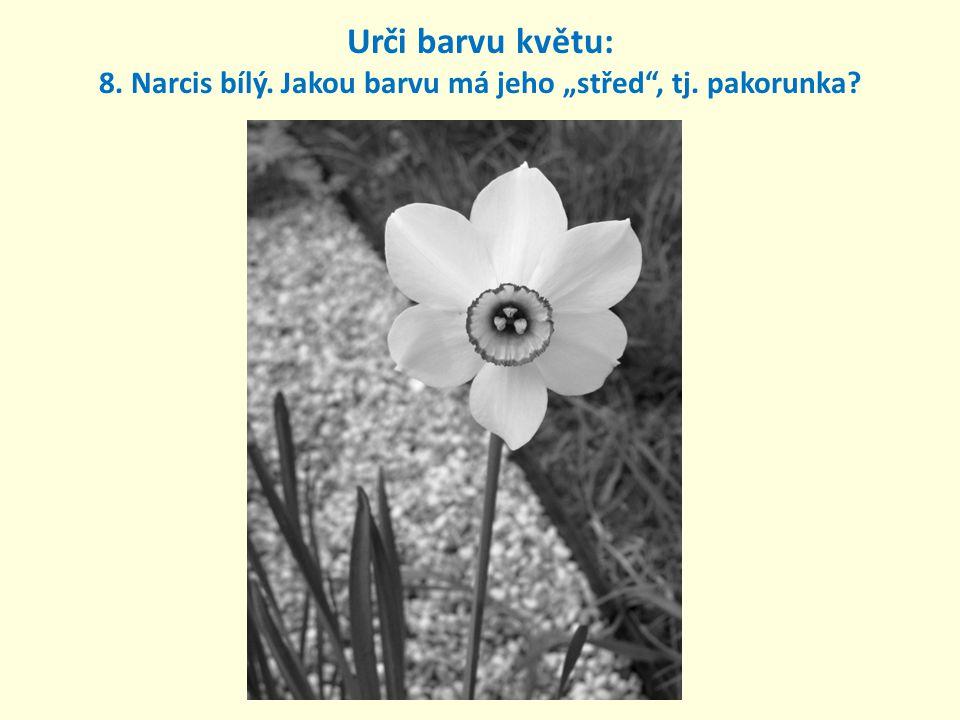"""Urči barvu květu: 8. Narcis bílý. Jakou barvu má jeho """"střed , tj"""