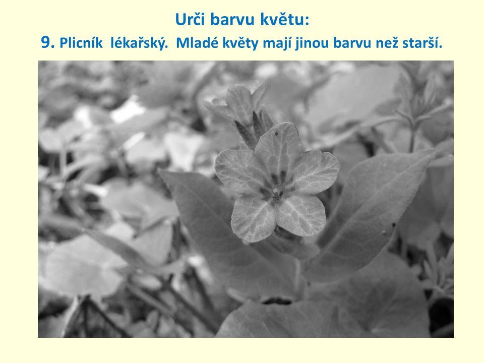 Urči barvu květu: 9. Plicník lékařský