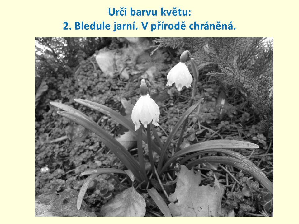 Urči barvu květu: 2. Bledule jarní. V přírodě chráněná.