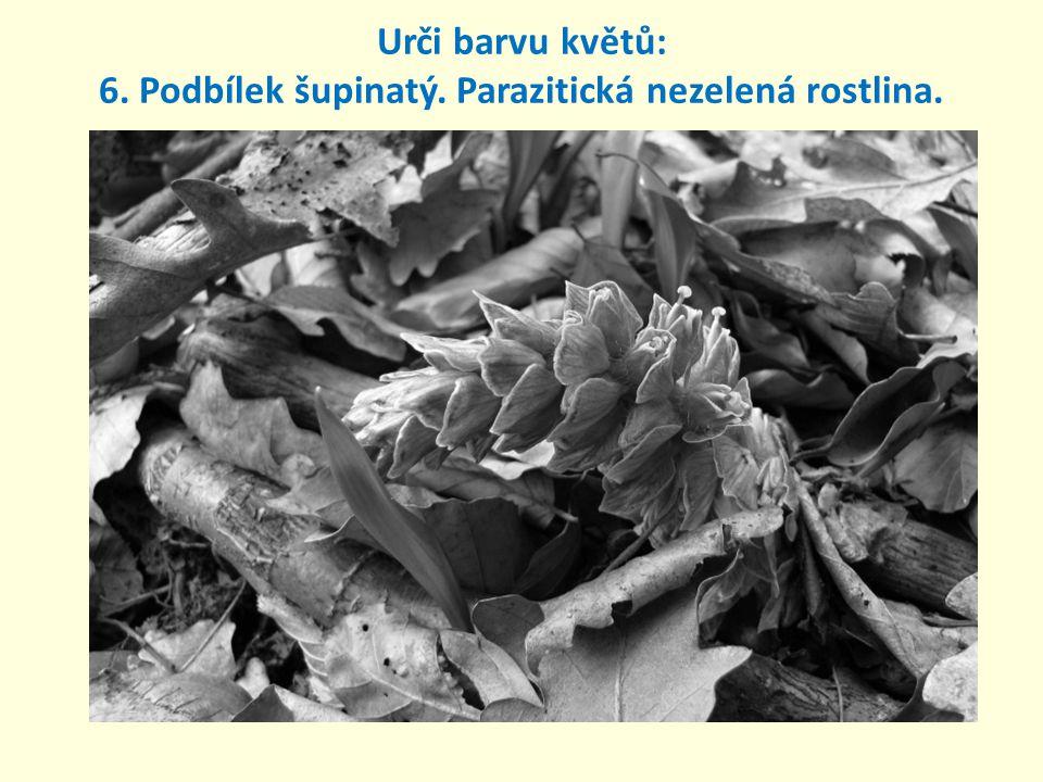 Urči barvu květů: 6. Podbílek šupinatý. Parazitická nezelená rostlina.