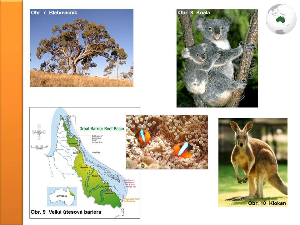http://cs.wikipedia.org/wiki/Blahovi%C4%8Dn%C3%ADk http://blogplnyzvirat.blog.cz/1008/koala-na-matcinych-ramenou.