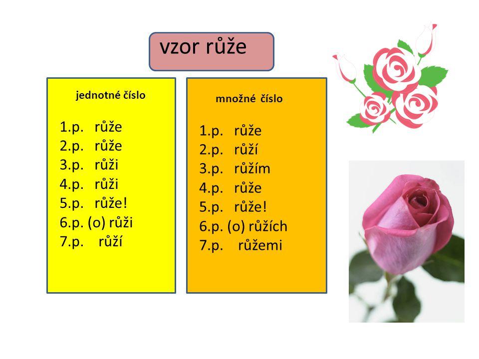 vzor růže 1.p. růže 1.p. růže 2.p. růže 2.p. růží 3.p. růži 3.p. růžím