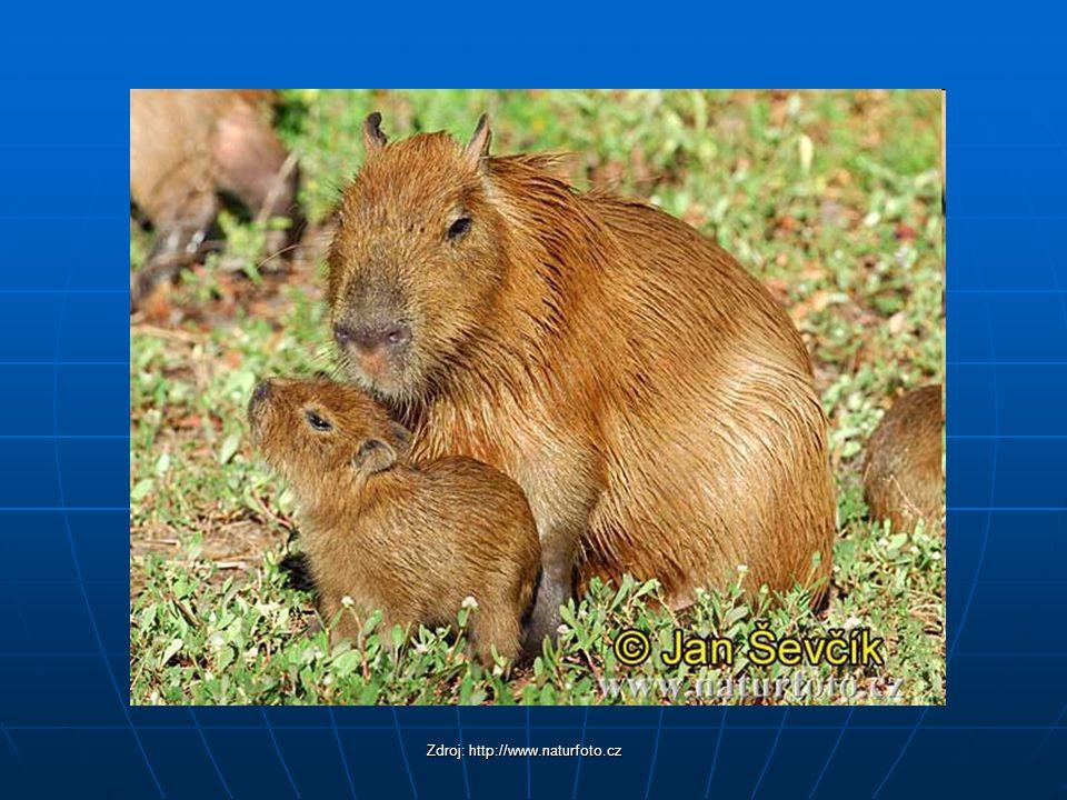 Zdroj: http://www.naturfoto.cz