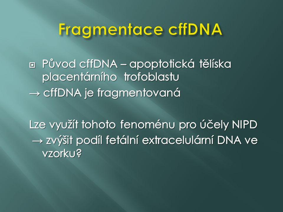 Fragmentace cffDNA Původ cffDNA – apoptotická tělíska placentárního trofoblastu. → cffDNA je fragmentovaná.