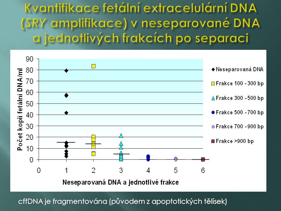 Kvantifikace fetální extracelulární DNA (SRY amplifikace) v neseparované DNA a jednotlivých frakcích po separaci