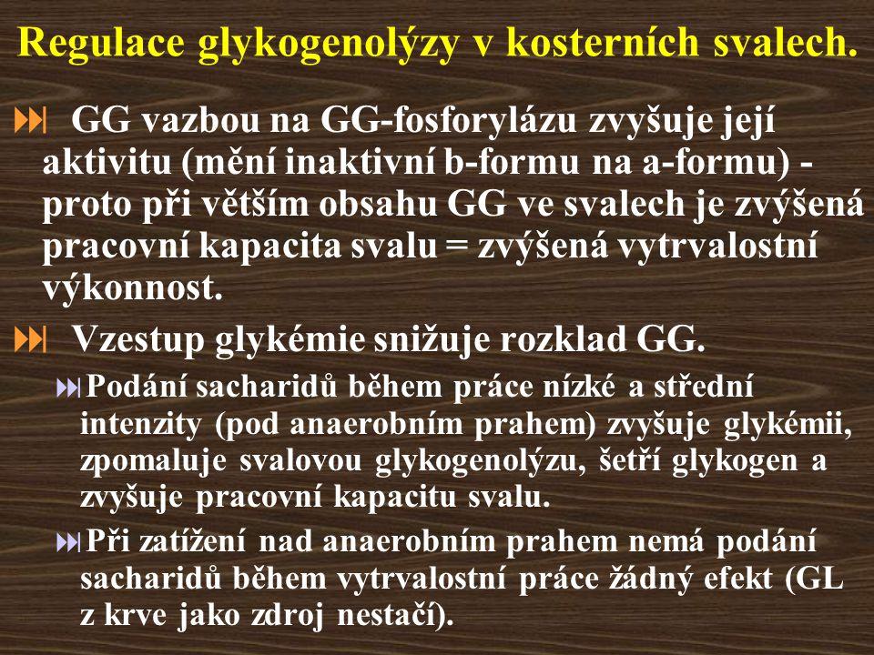 Regulace glykogenolýzy v kosterních svalech.