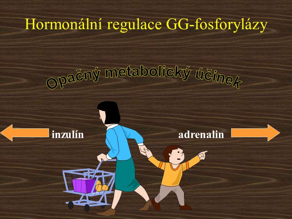 Hormonální regulace GG-fosforylázy