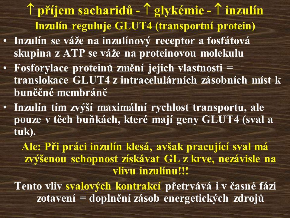  příjem sacharidů -  glykémie -  inzulín