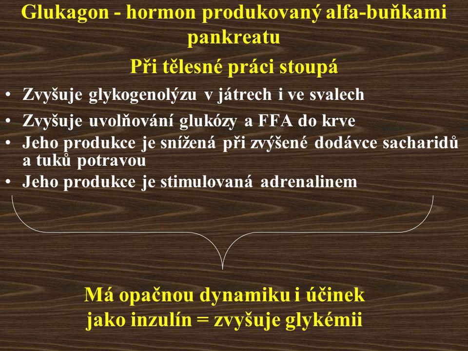 Glukagon - hormon produkovaný alfa-buňkami pankreatu