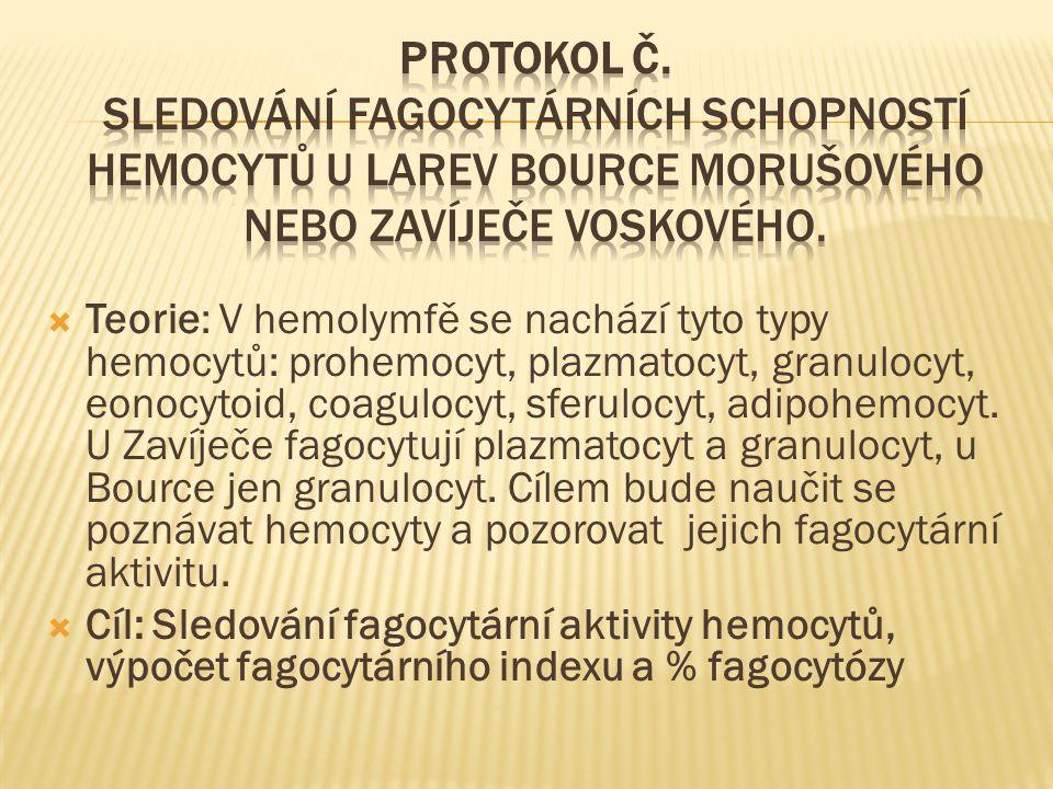 Protokol č. Sledování fagocytárních schopností hemocytů u larev Bource morušového nebo Zavíječe voskového.