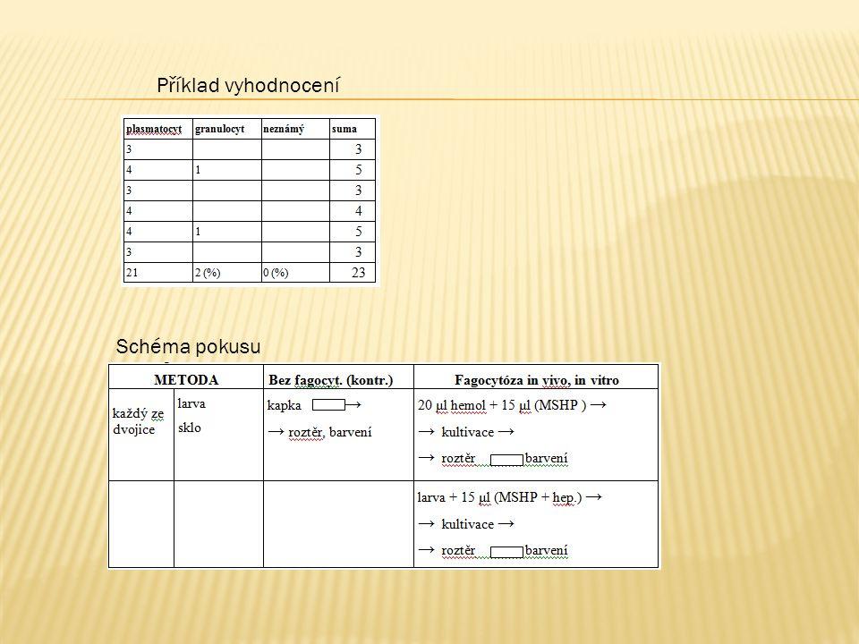 Příklad vyhodnocení Schéma pokusu