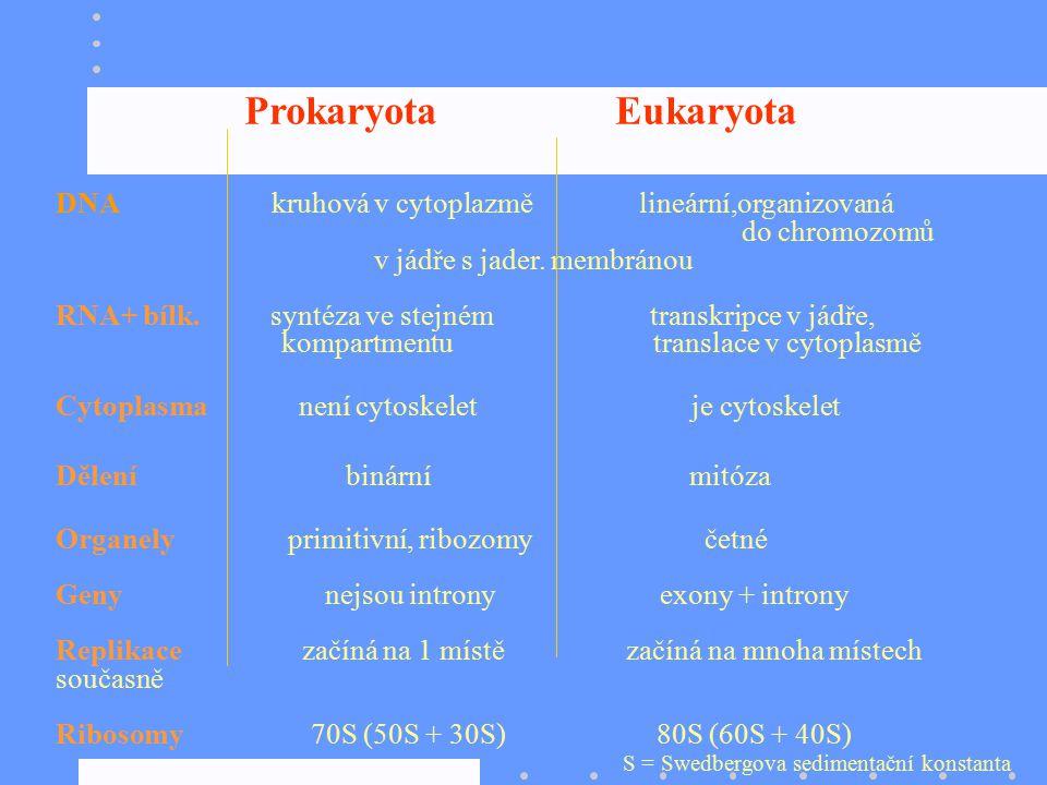 do chromozomů v jádře s jader. membránou