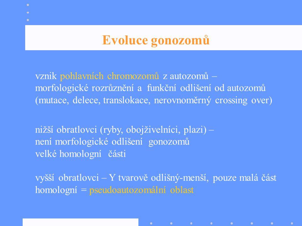 Evoluce gonozomů vznik pohlavních chromozomů z autozomů –